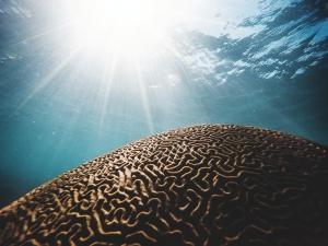 Das Gehirn: Körper des Bewusstseins und Unterbewusstseins