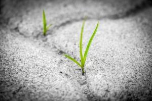 Unterbewusstsein bietet Chance und Risiko, hat Potenzial, wie Pflanze die Stein durchbricht